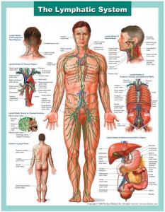 Mitä Lymfaterapia on